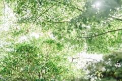kitanosama20201024-122